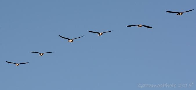 goose02-web
